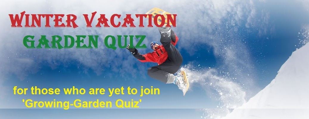 Winter Vacation Garden Quiz