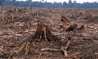 deforestation 1